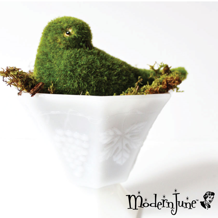 3.-Top-with-Moss-Bird