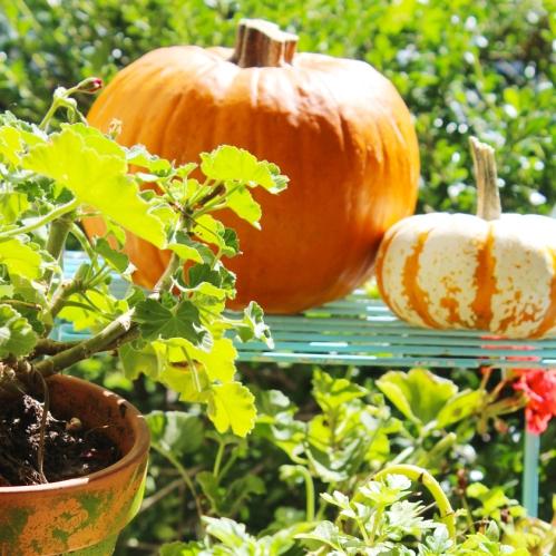 container-garden-and-pumpkins