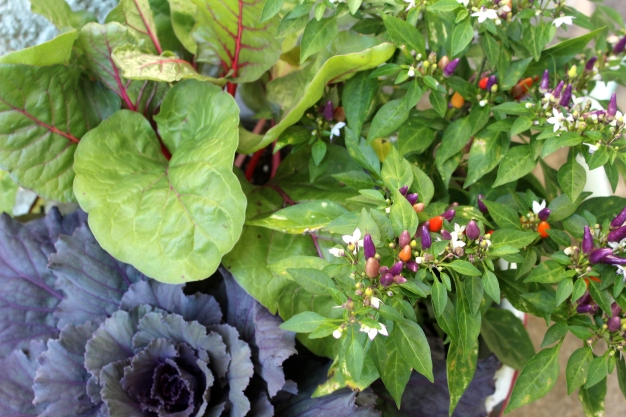 fall-container-planting