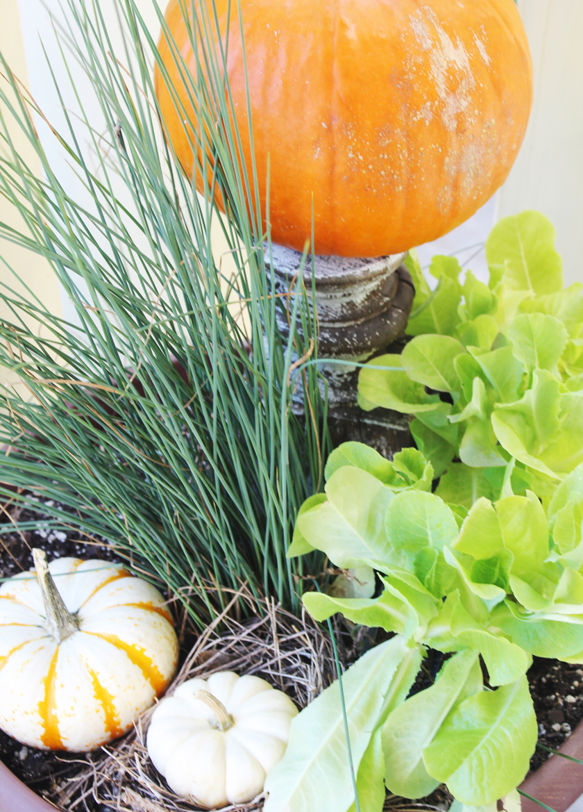 lettuce-and-pumpkins