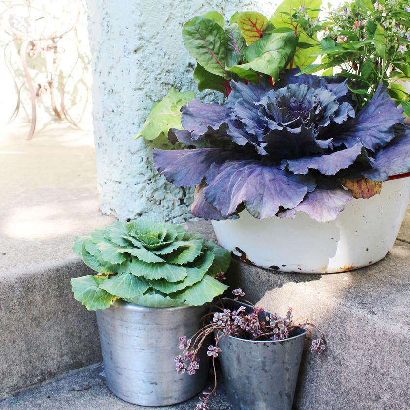 wash-basin-planter
