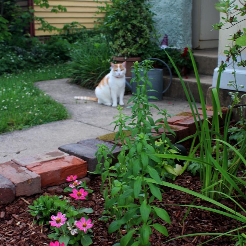 ozzy-in-the-garden